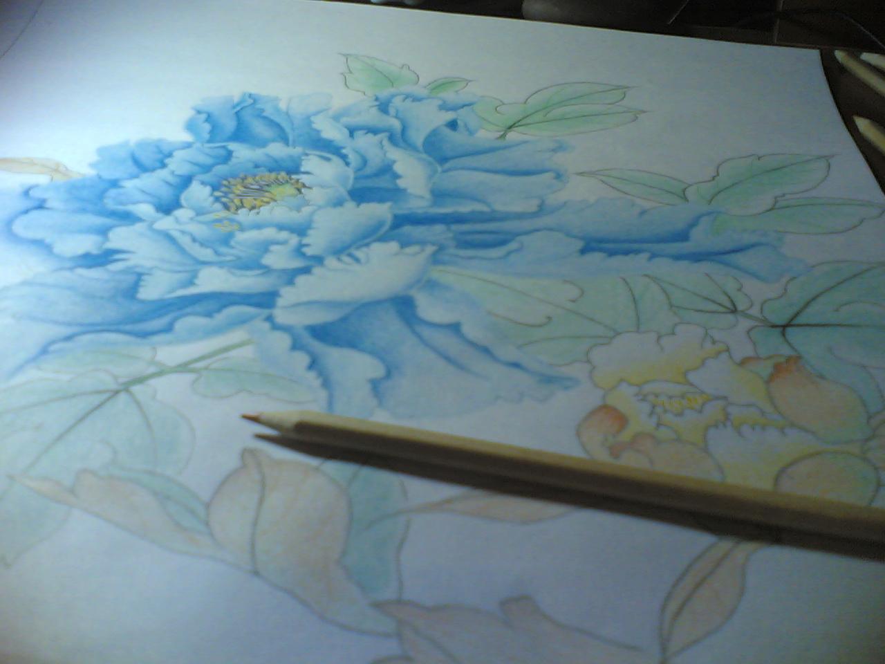 牡丹画彩铅手绘步骤图